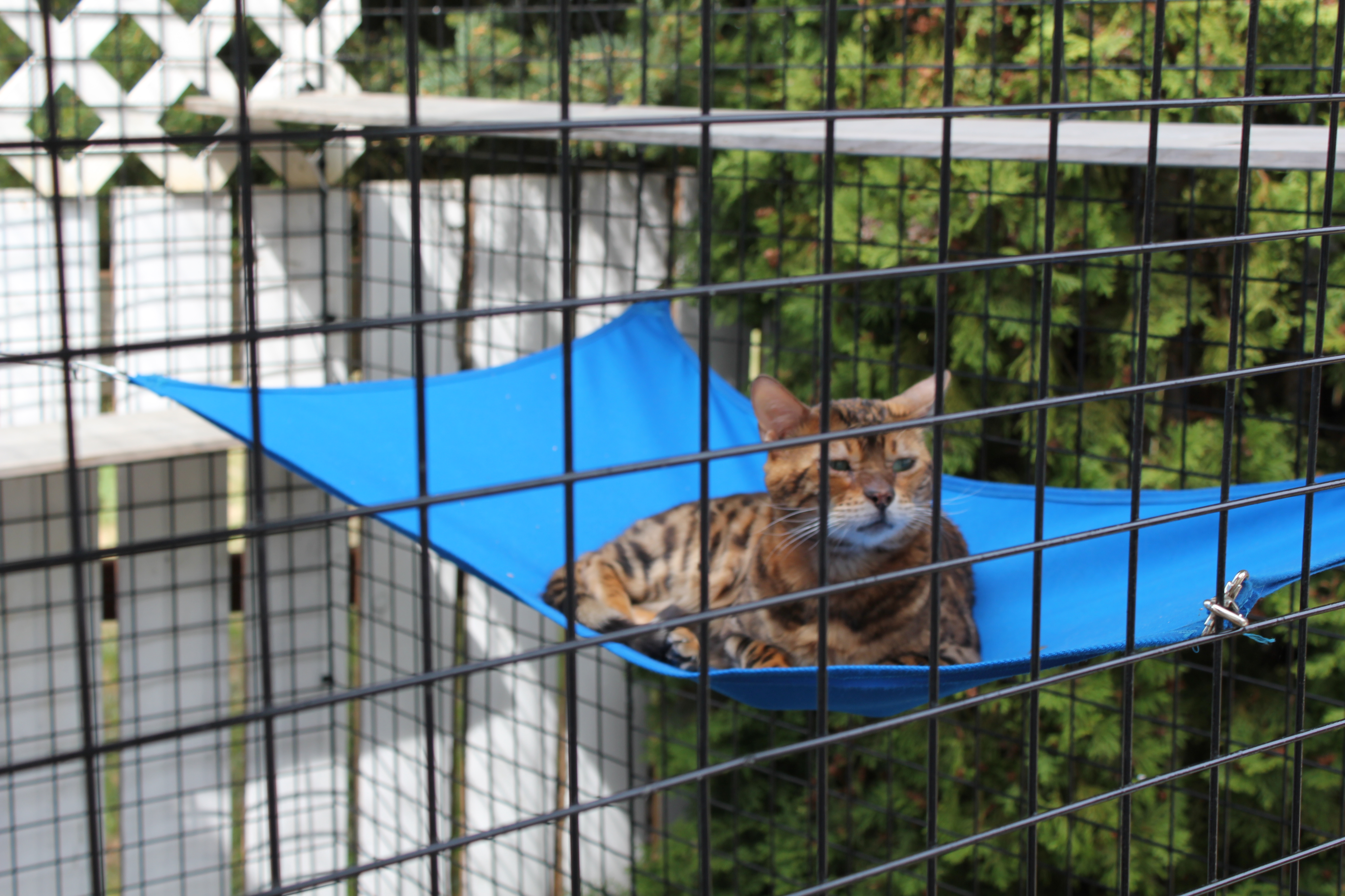 Catios Everything You Need To Know Catio World