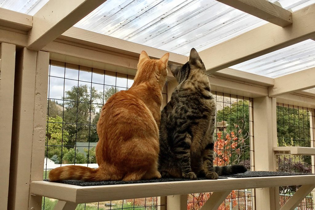 What Is A Catio