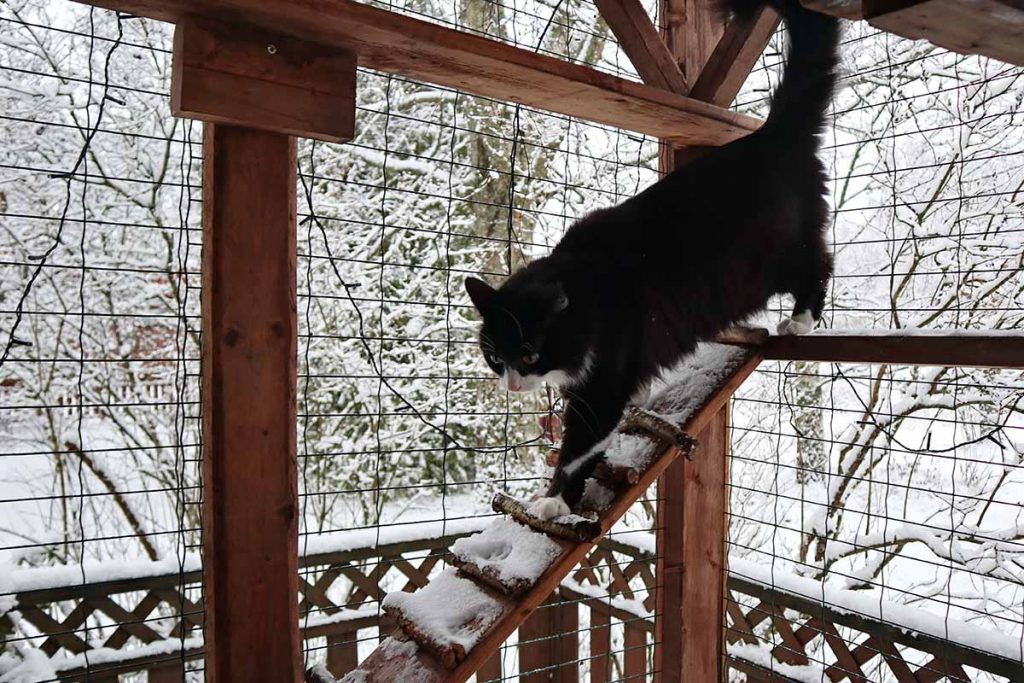 Winter Climate And Catio Location