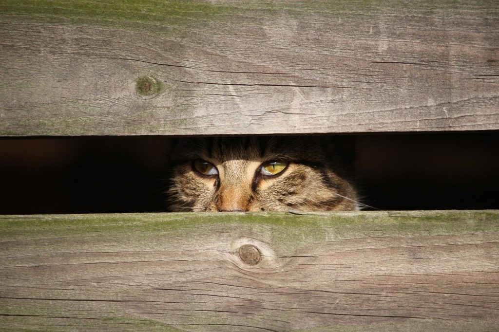 cat trapped