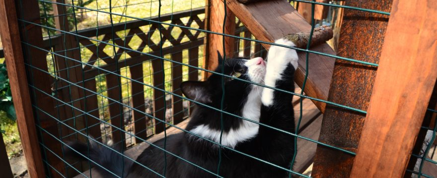 Do You Need Planning Permission For A Catio