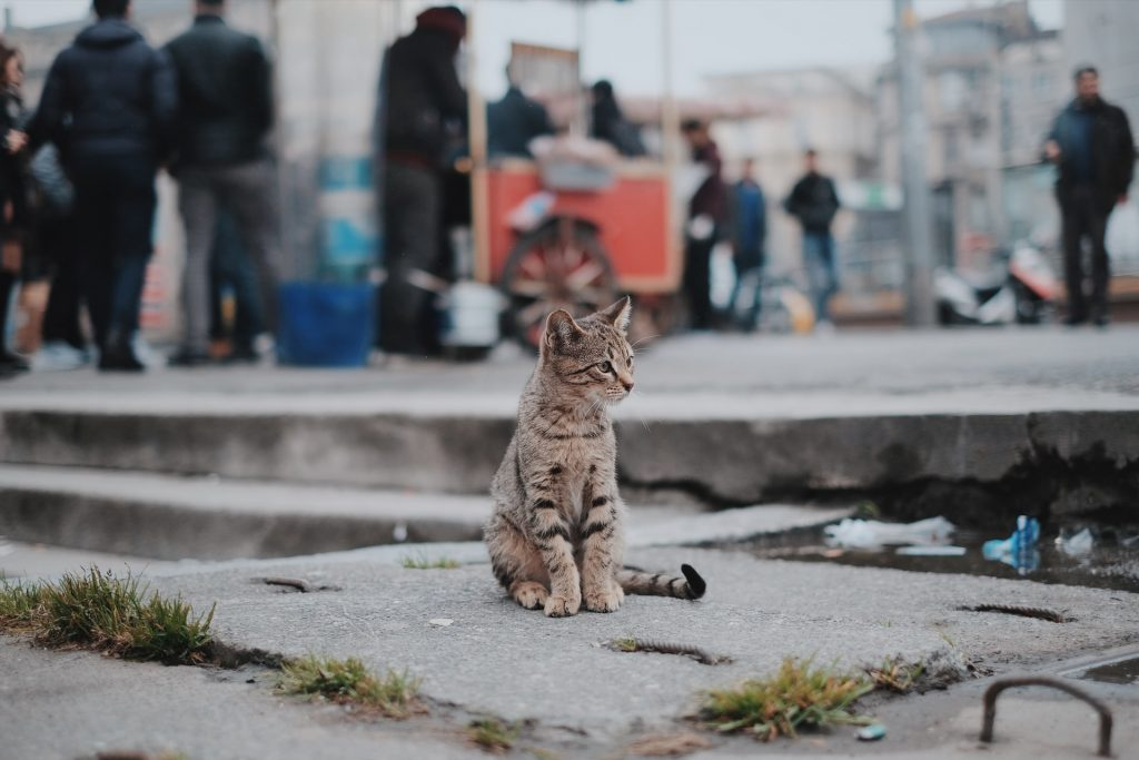 cat Lost Or Injured