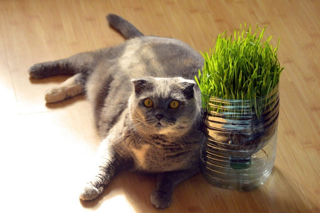 Pet grass and catnip