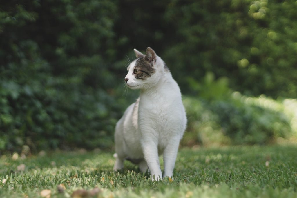 Why Do Cats Go Missing For Days