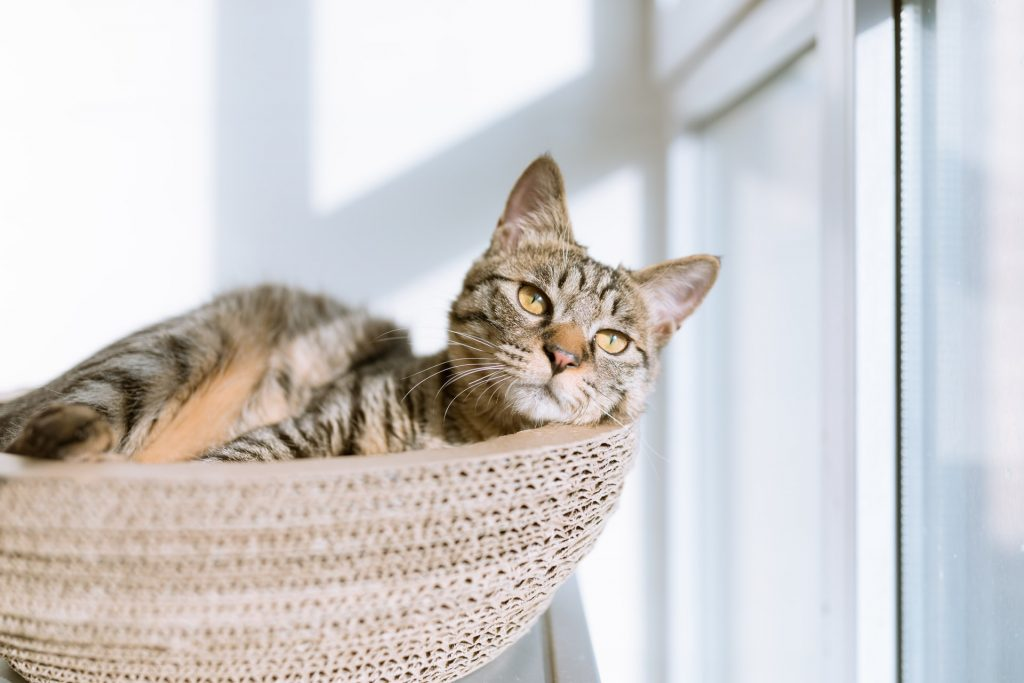 cat beds and perches